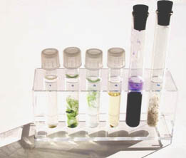 Test tubes in a clear rack containing water plants and rocks